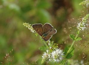 Butterflies #2